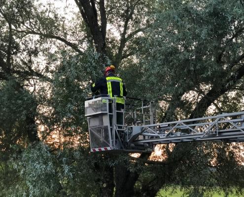 2018-07-28 Baum auf Straße